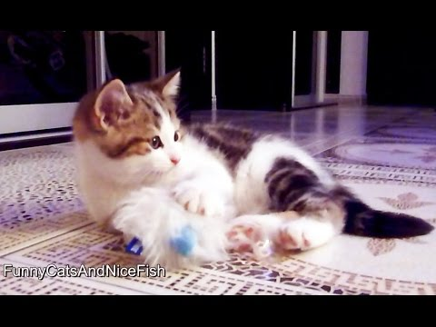 Greedy Oscar | Funny kitten playing