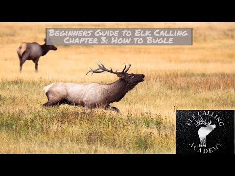 How to Bugle | Chapter 3 - Beginners Guide to Elk Calling