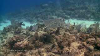 MJS Visions Underwater Video, St. Croix U.S. Virgin Islands