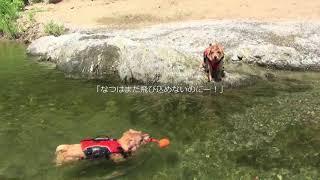2018.8.28「道の駅 からり」 なつめ10か月にしてこの泳ぎ!この夏、頑張...