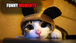 Подборка смешных моментов с котами 2016 ЛУЧШИЕ ПРИКОЛЫ С КОТАМИ HD