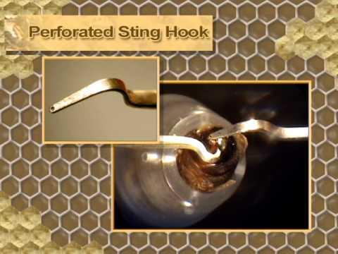 Instrumental Insemination Of HoneyBee Queens - Part 1 Of 2