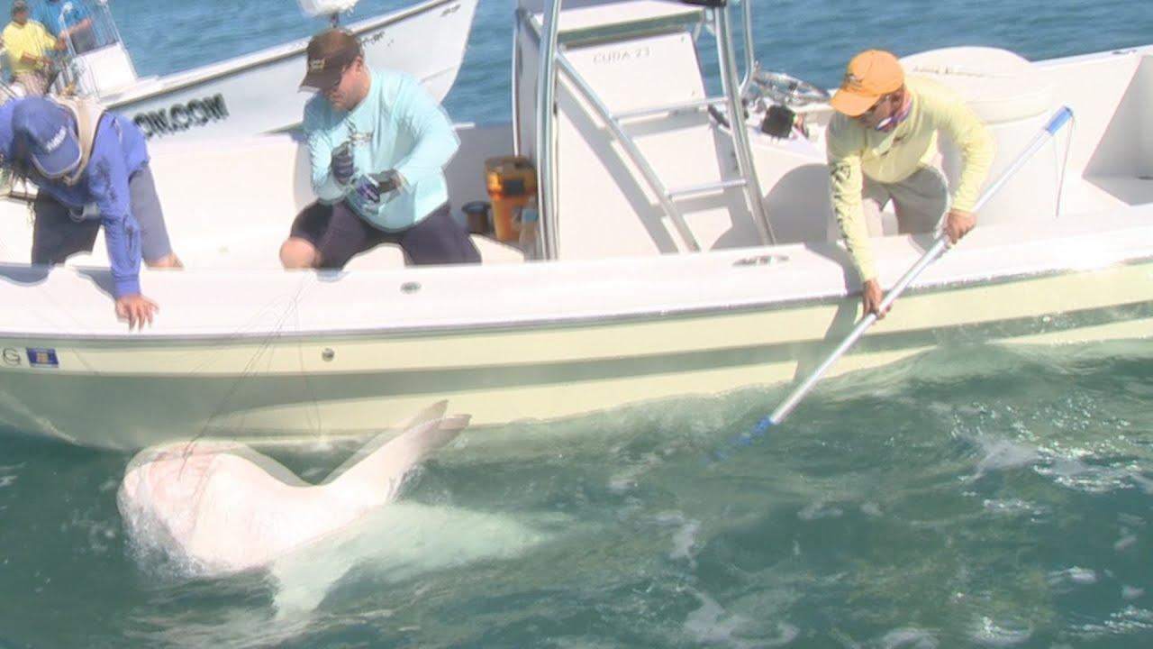 Shark catching videos catching sharks catching big for Shark tank fairy door