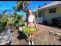 เก็บผักในสวนปลอดสารพิษ(ภาษาอังกฤษ) Harvest day in my garden  l Jayy Crane's Organic Garden : EP1