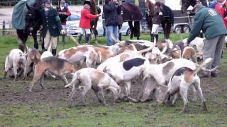Curée Für Die Hunde Der Sauerlandmeute