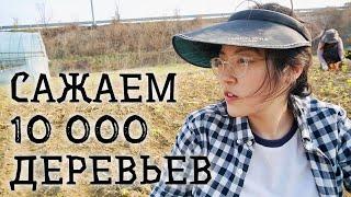 ДВА ДНЯ и 10 000 ДЕРЕВЬЕВ... Засаживаю мой участок земли в Южной Корее!