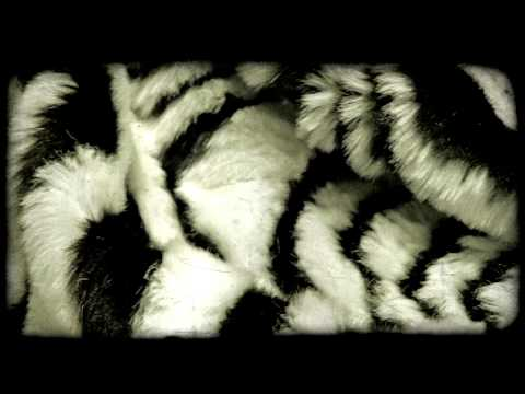 Panning shot of a furry fabric. Vintage stylized video clip.