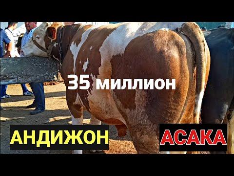 АНДИЖОН АСАКА МОЛ