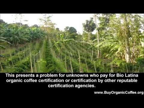 Wholesale Green Coffee