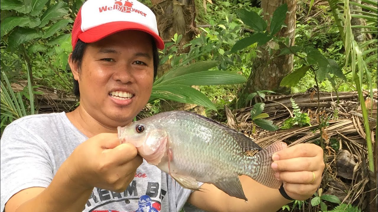 BACKYARD TILAPIA FARMING|SIMPLE LIFE IN THE PROVINCE - YouTube