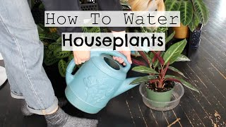 How To Water Houseplants | When & How Much to Water Indoor Plants!