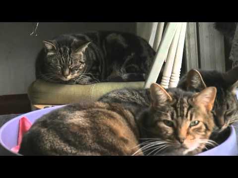 The North Toronto Cat Rescue