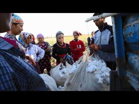 Documentary: Forced Labour in the Uzbek cotton industry