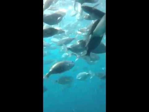 Gran Canaria Glass Bottom Boat Youtube