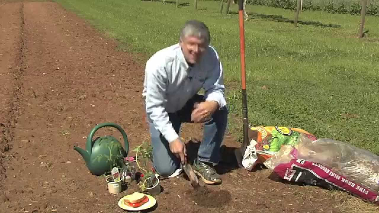 Walter Reeves Planting And Growing The Best Tomatoes Georgia Farm Monitor