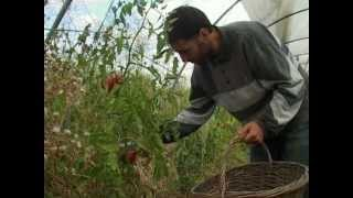 Permaculture au petit colibri le film