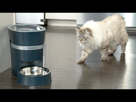 Feed Your Pet from Your Phone - PetSafe® Smart Feeder
