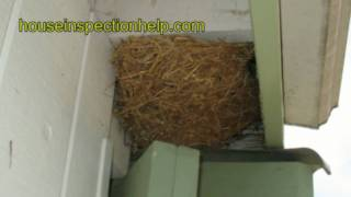 Bird Nest Problems under Roof Eave - Could This Be a Problem?