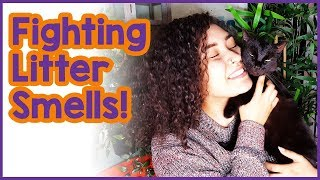 Litter Box Smell Solutions! 3 Tips to Stop Litter Box Stink!