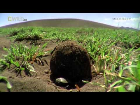 National Geographic Wild Worlds Weirdest Freaks Of Nature CONVERT HDTV XviD AFG
