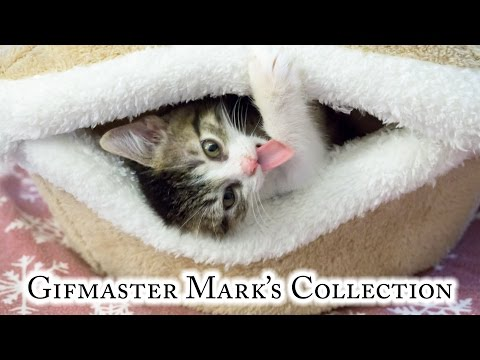 Gifmaster Mark's Collection