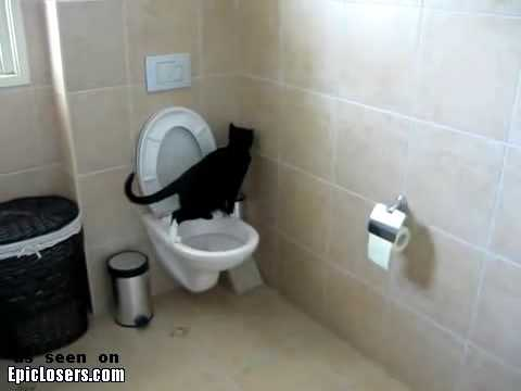 Smart Cat Uses Toilet – LOLCats
