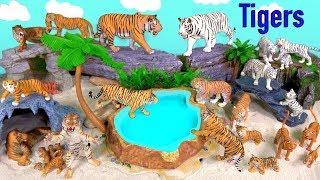 Learn Wild Animals - Tigers - Big Cat week 2019 - Learn Wild Zoo Animals -  Fun Toys For Kids