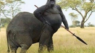 TOP 7 MUTACIONES DE ANIMALES INCREIBLES - NO CREERAS QUE EXISTEN