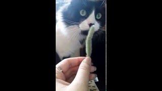 Кактус ест кота!!!!!