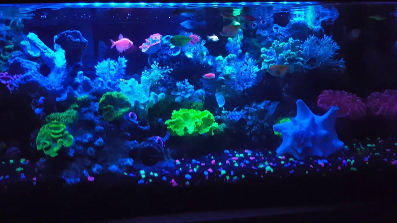 20 gallon long glofish aquarium update youtube
