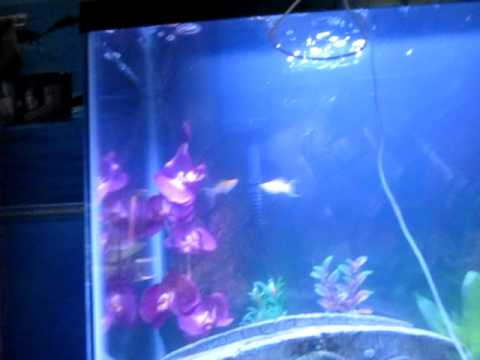 New fish tank cloudy water youtube for My fish tank water is cloudy