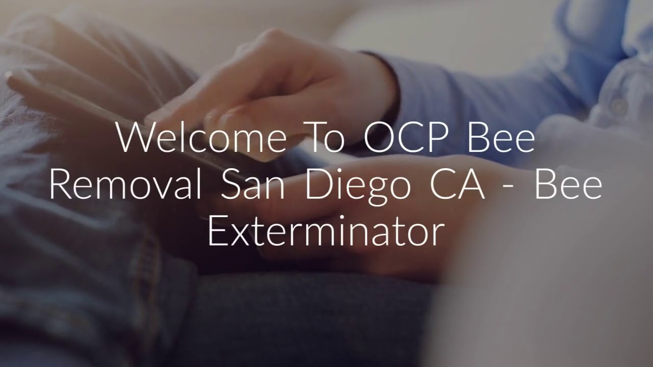 Professional Bee Removal Service in San Diego, CA