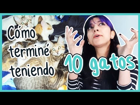 TODO SOBRE MIS GATOS ♥ Meri la loca de los gatos