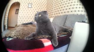 Кошка слышит странные звуки :D