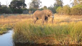 Vundu Camp Mana Pools Zimbabwe