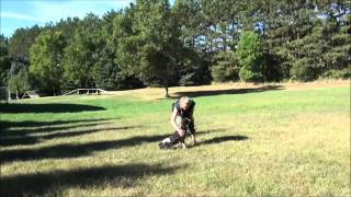 Theo (springer Spaniel) Boot Camp Dog Training Video