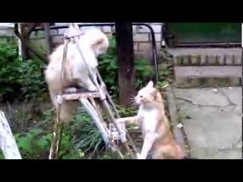 חתולונובלה - לקט מרגש