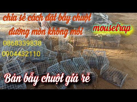 Hướng Dẫn Cách Đặt Bẫy Chuột Đường Mòn Không Mồi, Bán Bẫy Chuột  |Mousetrap|KhaNguyen