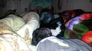 Собака которой снится наверно еда. Я плакаль