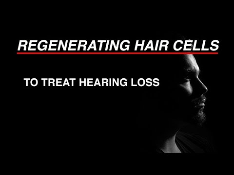 regenerating-hair-cells-to-treat-hearing-loss