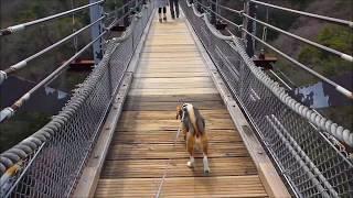 交野市にある大阪府民の森、ほしだ園地。 高さ50mの吊り橋が有名。 今...