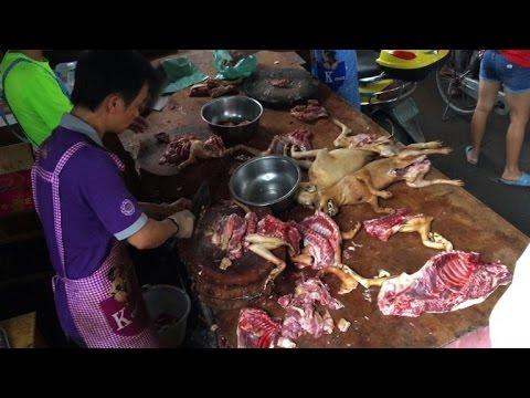 Chine: la fête de la viande de chien débute comme prévu