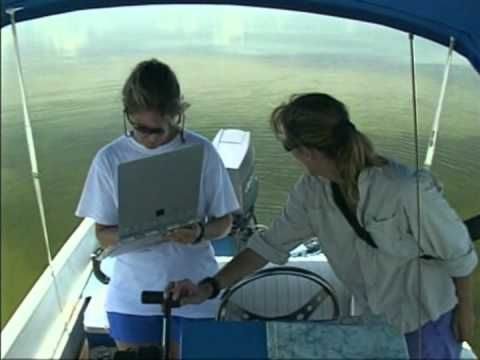 Dolphin Ecology Project on Waterways Episode 201