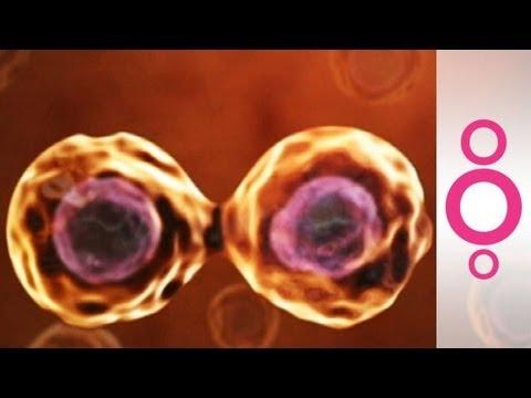 Adult stem cells: key to regenerative medicine  - do you know?
