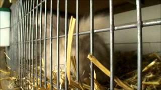 Het konijn de aanschaf