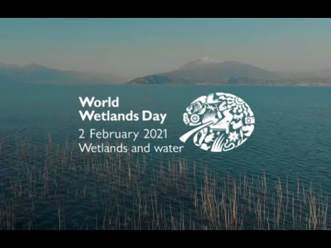 World Wetlands Day 2021: Water, wetlands and life are inseparable