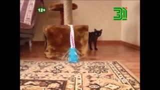 Полезная программа, сюжет о бурманских кошках.