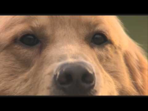 J.R. - 'Air Bud' is Feasible, I Have Proof