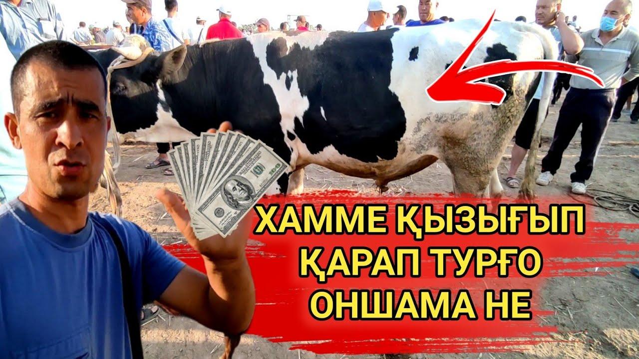 МАЛ БАЗАР 21-ИЮЛЬ/ҚАНЛЫКОЛ МАЛ БАЗАРЫ/СКОТНЫЙ РЫНОК/BUQALAR/BIG BULLS IN THE WORLD/BIG COW/