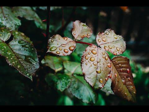 Relaxing Music & Soft Rain Sounds-Beautiful Piano Music for Sleeping, Insomnia, Studying & Relaxing